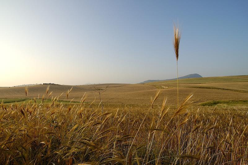 """""""paesaggi siciliani 4# """" by luciapensache on Flickr (CC)"""